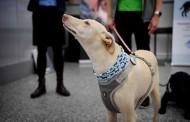 الكلاب لاكتشاف المصابين بكورونا… في مطار هلسنكي