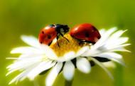 هواتفنا المحمولة تلعب دورا في القضاء على الحشرات