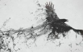 طائر أسود لا يهاجم إلا الرجال